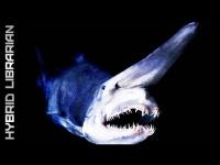 Amazing BioluminescentGlowing Deep Sea Creatures  YouTube